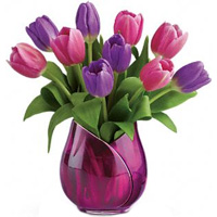 Beautiful 20 Rainbow Tulips