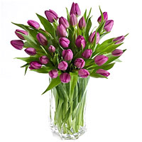 Beautiful 30 Purple Tulips