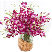 Lovely Purple Dendrobium Orchids
